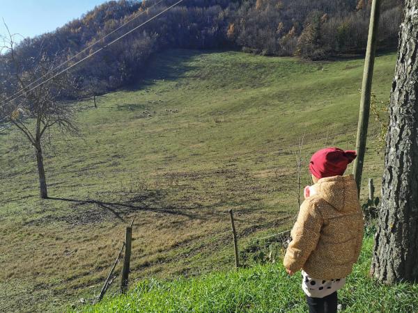 bimba che osserva il panorama con pecore che pascolano sul prato