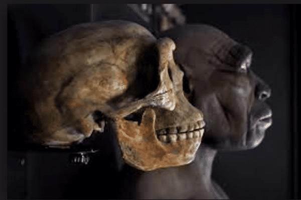 teschio umano museo donini bologna