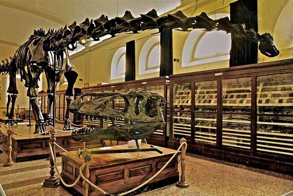 scheletro dinosauro museo Bologna