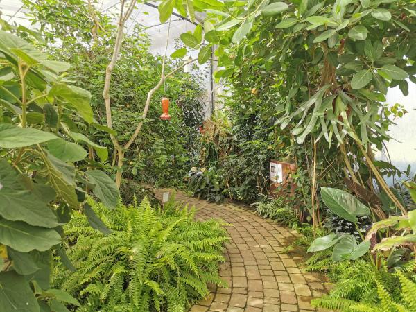 serra delle farfalle con piante e farfalle