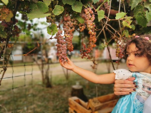bimba che afferra un grappolo d'uva