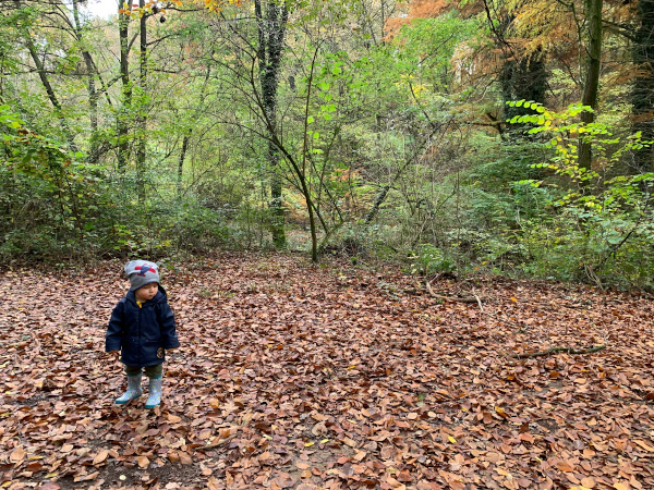 Boschi di Carrega a Parma: Fall Foliage ma non solo