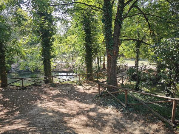 sentiero con ponte e laghetto in mezzo al verde