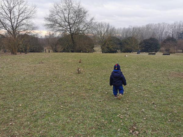 bimbo in mezzo ai conigli