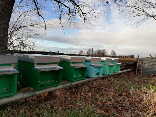 arnie delle api