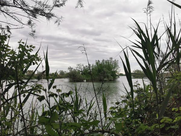 piante in primo piano e isoletta in mezzo all'acqua con cigno