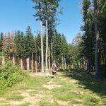 papà passeggia con bimbi nel bosco