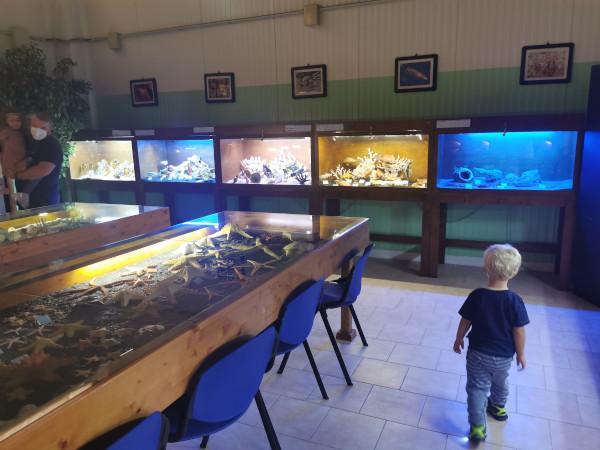 Aquae mundi: un'oasi e museo della vita nelle acque (e non solo) nella campagna di Ravenna